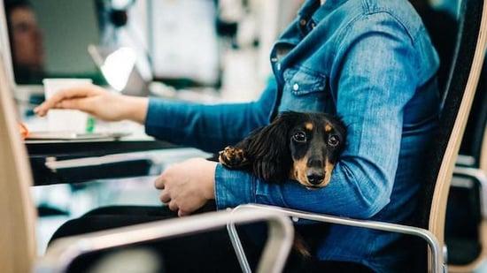 australian-companies-awesome-company-culture-wesley-dog