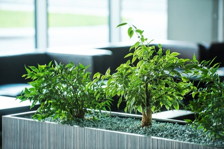 natural-light-plants-in-workspace