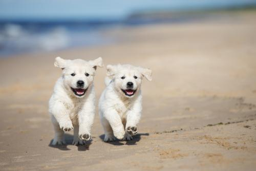 recognition-dog-walking