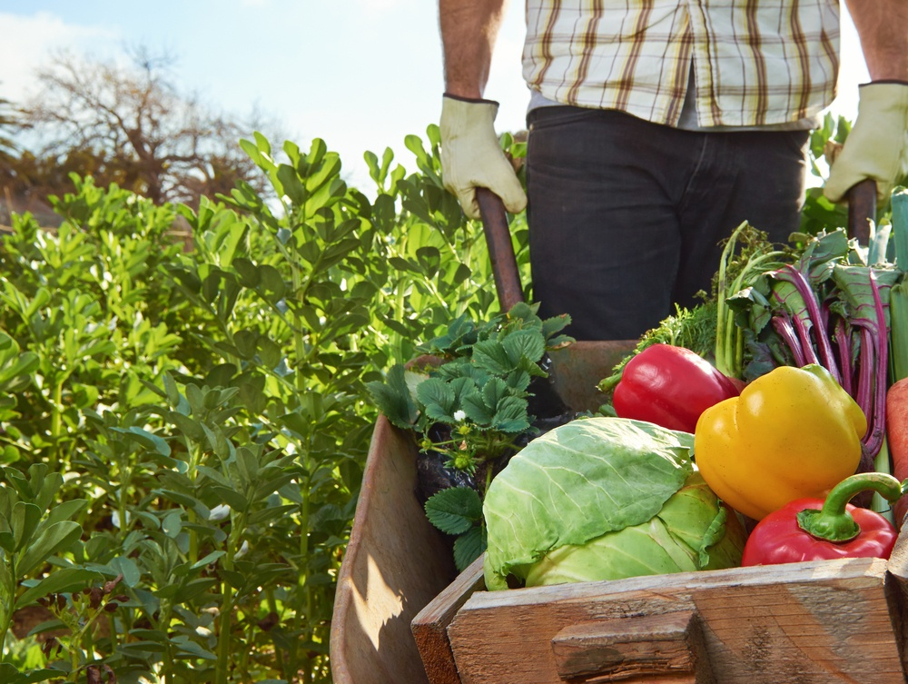farmer-harvest-vegetables.jpg
