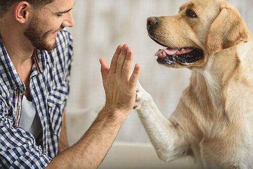 dog-human-high-five.jpg