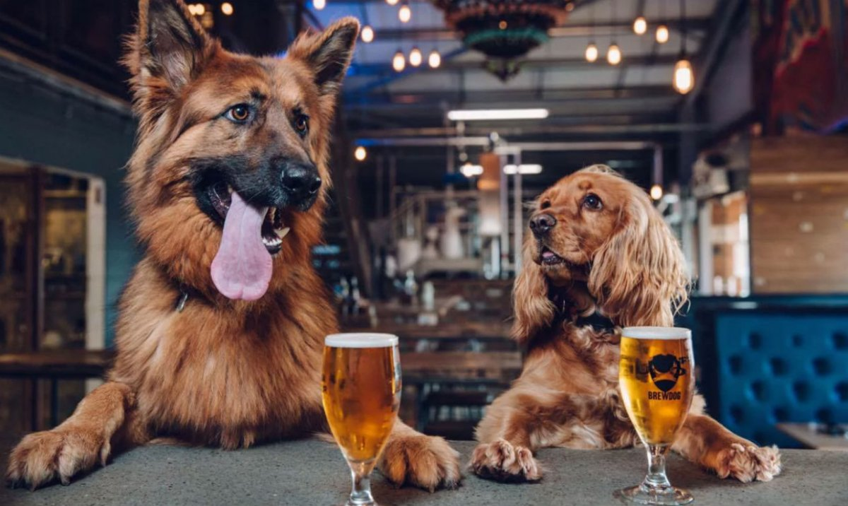 brewdog-1