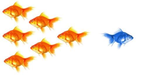 fish-in-sea.jpg