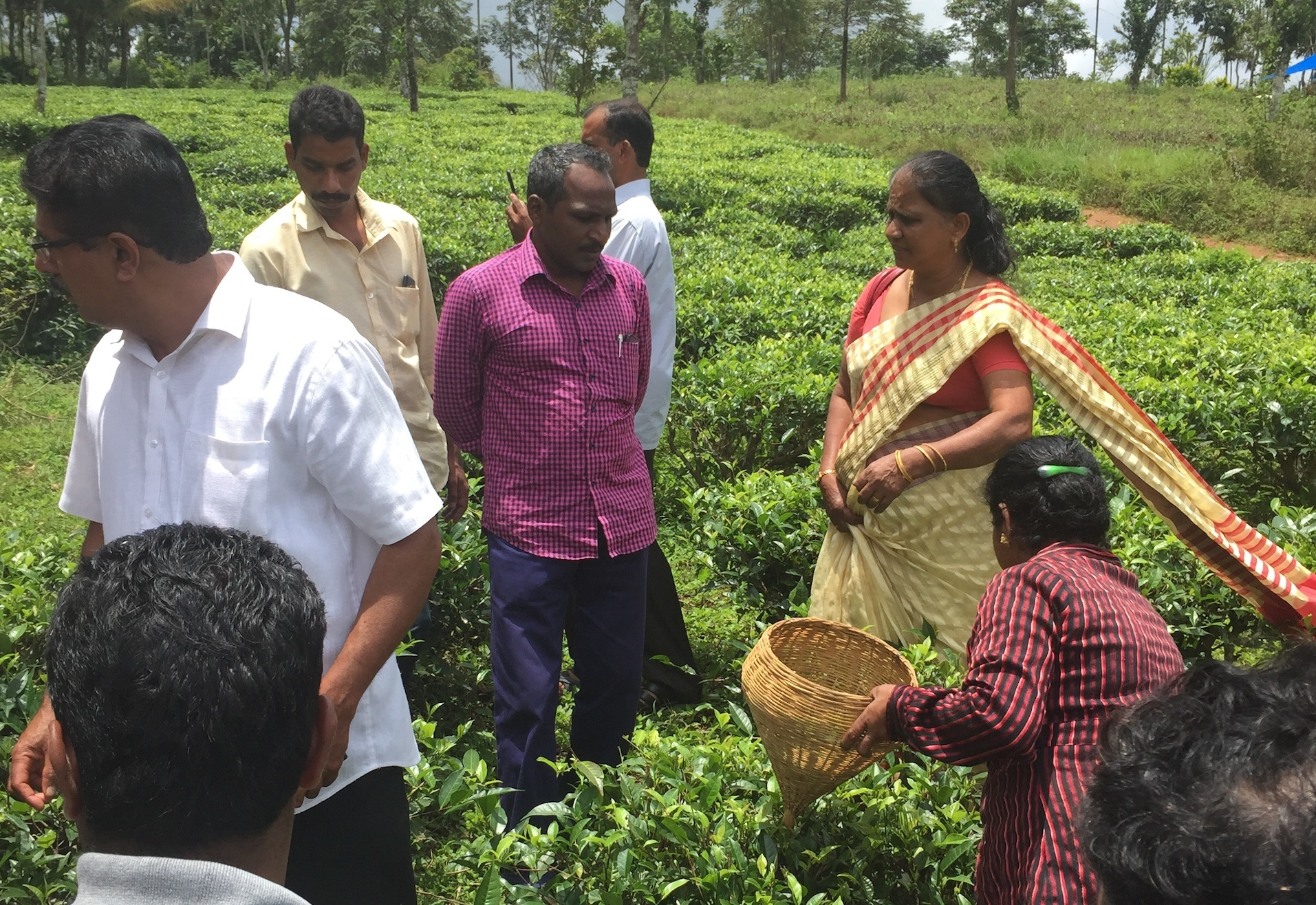 Sushema showing members of the local farming community and Indian Tea Board the handplucking technique_cropped.jpg